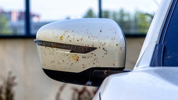 Największa zmora kierowców – owady! Jak się pozbyć niechcianych gości na karoserii?